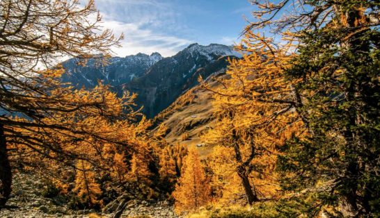 This is Courmayeur. Autumn at its peak.